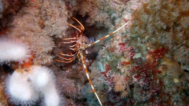 Chris Whitworth takes us on an underwater wildlife safari looking at what lives on the Bawden Rocks a mile from the North Coast of Cornwall.