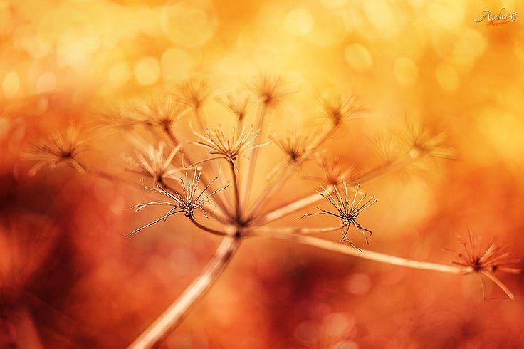 Welcome Summer | ©Atelier35 www.facebook.com/FotoAtelier35