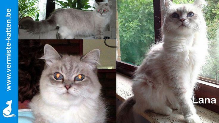 Pin van Vermiste Katjes op kat Katten, Mist