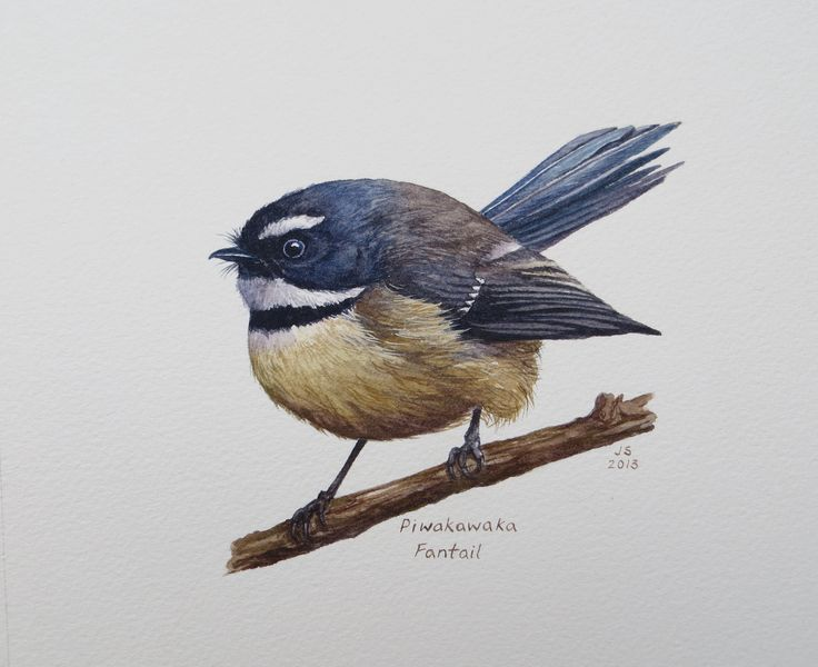 Fantail-Piwakawaka  Watercolour  200x300mm