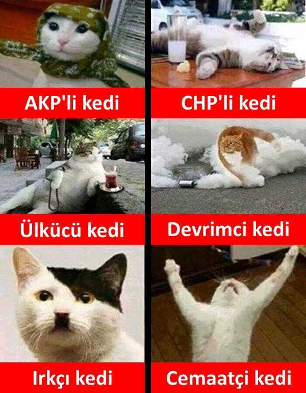 Türkiyemizin kedileri: - AKP'li kedi - CHP'li kedi - Ülkücü kedi - Devrimci kedi…