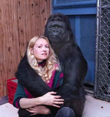"""Koko - Hanabiko 花火子 literally """"fireworks child"""" with her caregiver Francine """"Penny"""" Patterson, an American animal psychologist, teached the western lowland gorilla modified form of American Sign Language. Koko has mastered the """"Gorilla Sign Language"""" (GSL) and understands approximately 2,000 words of spoken English, in addition to the signs"""