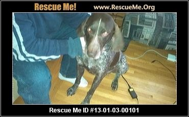 Buster-URGENT— Minnesota German Shorthaired Pointer Rescue — ADOPTIONS —RescueMe.Org