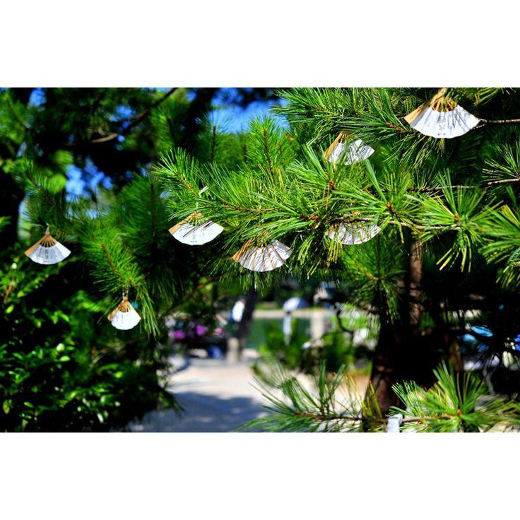 天橋立の近くの智恩寺には、たくさんの扇子が・・・。 可愛い おみくじです(^-^)/ #京都のまちあるき #天橋立#宮津市#智恩寺#おみくじ