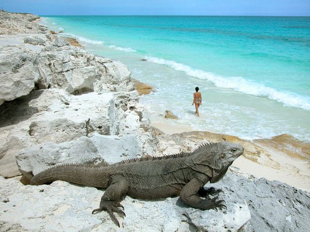 Sur la plage de Cayo Largo. Coups de coeur pour le monde | Repos complet à Cayo Largo | http://www.coupsdecoeurpourlemonde.com