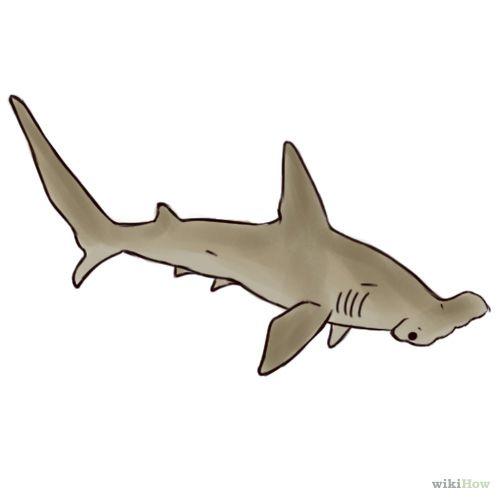 Как рисовать акула-молот: 5 шагов (с картинками)