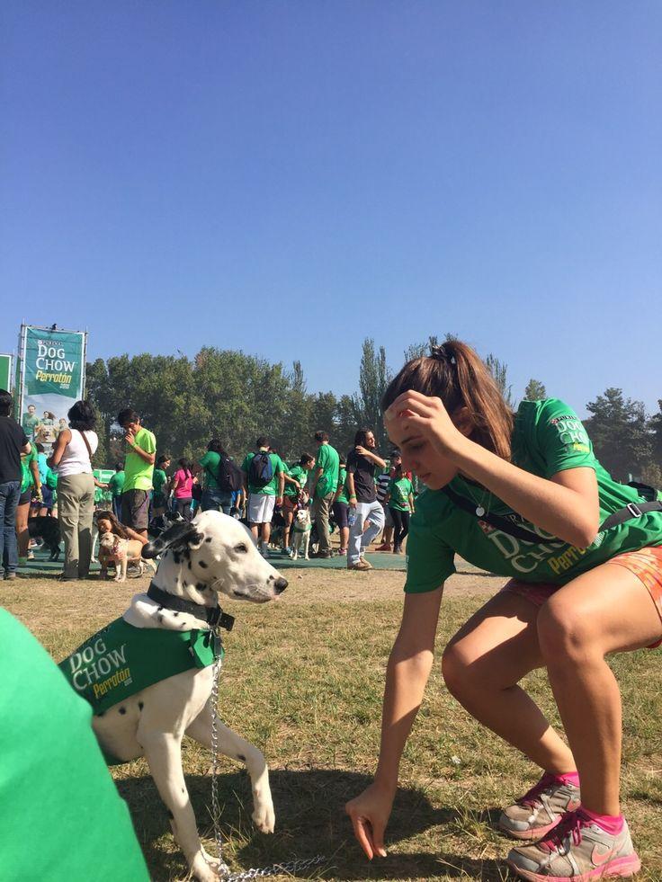 1 añitooo Bambino! Corrida Dog Chow!