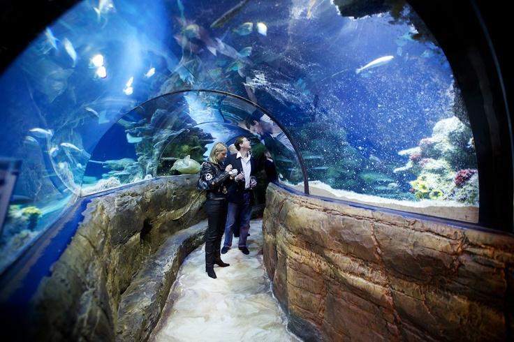 The Ocean Tunnel At The Sea Life London Aquarium Sea