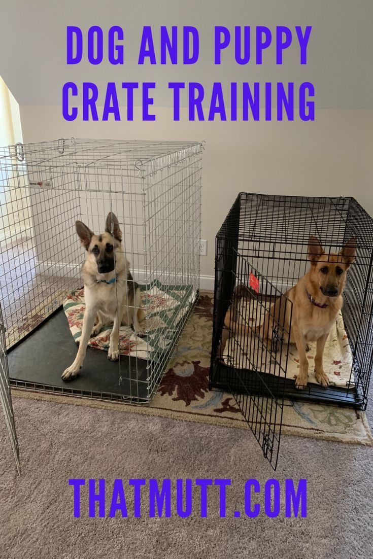 Dog And Puppy Crate Training Puppy Crate Dogs Puppies Crate