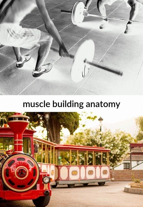 muscle building anatomy_40_20190131061755_51 vegan #muscle