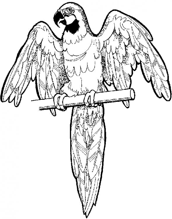 For i 39 ll fly away parrot coloring page mask off the for Coloring pages parrot