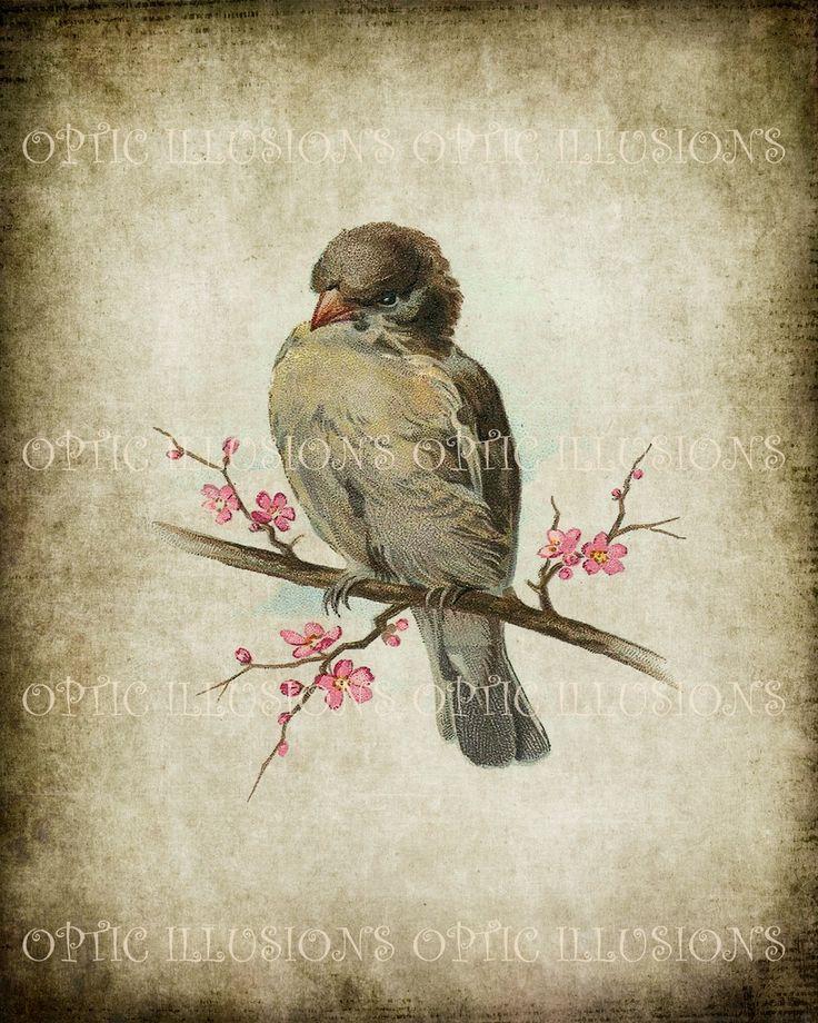 Printable Digital Picture - Vintage Bird Illustrations on ...