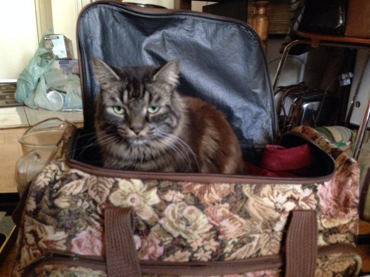 Boog snuck into my wife's luggage as she  got ready to go to New York