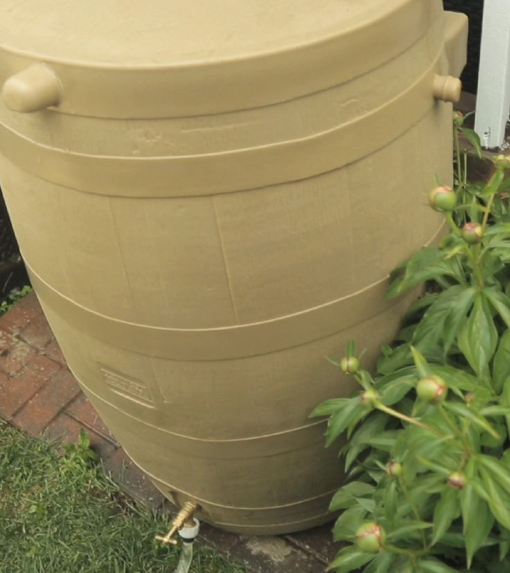 Add #goldfish to your rain barrel to prevent #mosquitoes from breeding there.