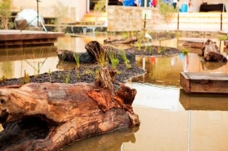 Perth Cultural Centre Wetland. The centre has created this mini ecosystem in the middle of Perth next to the WA Art Gallery in Northbridge - there are frogs, wetland birds and all sorts of beautiful insects including bright blue dragonflies! What a great idea. Check out the website for their other fantastic educational initiatives, like the urban orchard only a few metres away!