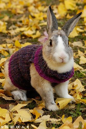 Bunny in Autumn sweater