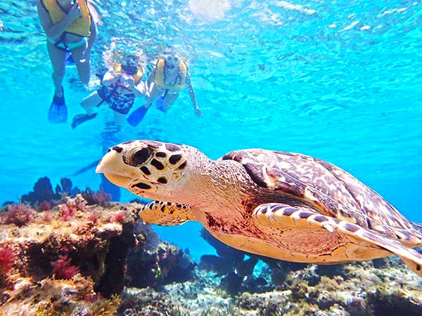 el cielo cozumel snorkel and party tour in cozumel party boat with tiger adventures