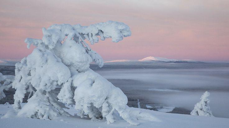 Pyha-Luosto National Park, Lapland, Finland. Visitfinland.com