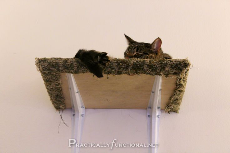 Cat Shelves: Make your own cat climbing area