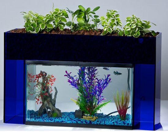 135 best images about aquaponics self cleaning aquarium for Fish tank garden