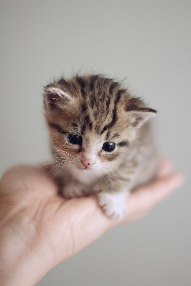 cute kitten sitting on a hand :) | cute animals ...