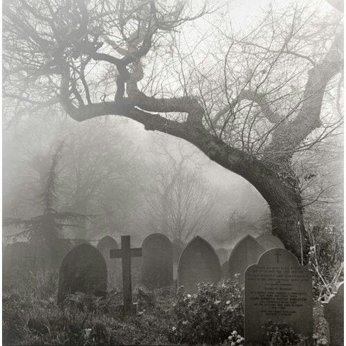 Super eerie feeling. Would be great to have a hidden skull in a tree for this scene. Would use the red forest inspiration for the forest to be brought in. Fully brought in at plain scene with no churchyard