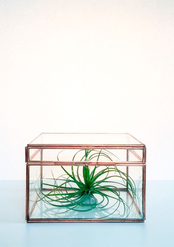 Air Plants - our next project for the Keen store. Could be a real nice decoration.