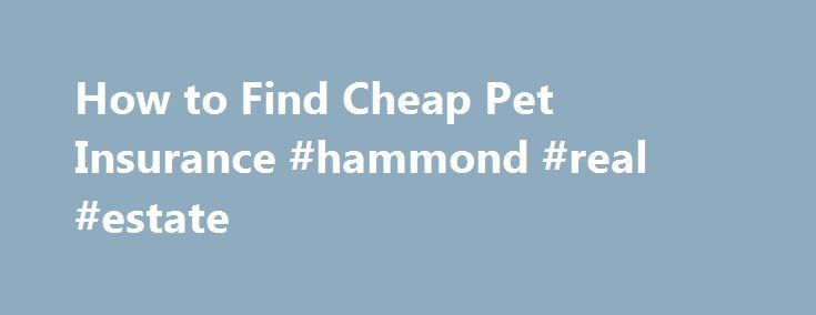 How to Find Cheap Pet Insurance #hammond #real #estate http://insurance.remmont.com/how-to-find-cheap-pet-insurance-hammond-real-estate/  #cheap pet insurance # How to Find Cheap Pet Insurance Shares & Saves Finding cheap pet insurance does not have to be a daunting task. There are a plethora of accredited insurance plans for you and your furry friend. Pet insurance is a great thing to have for yet pet, as veterinary costs begin to […]The post How to Find Cheap Pet Insurance #hammond #real…