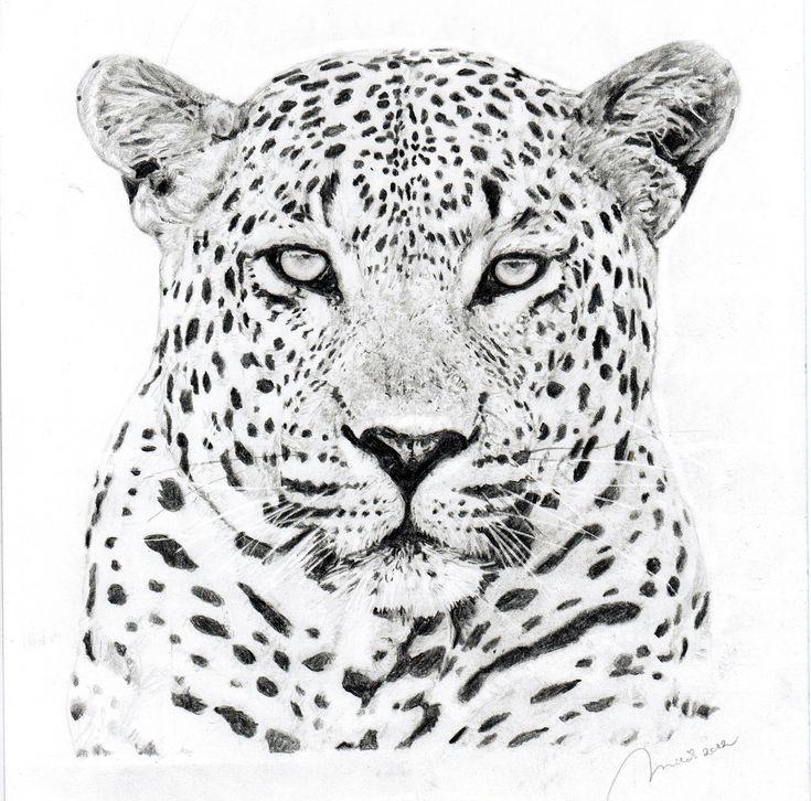 Картинки черно белое животных рисованные
