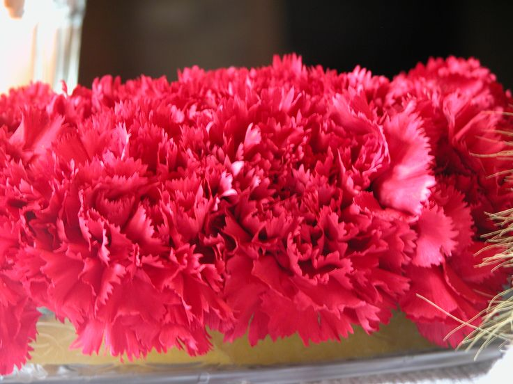 oh-sooo-pink carnations:)