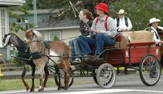 Goat pulling cart | Nubian Wether, Harness Team at the 2006 Mason County Forest Festival ...
