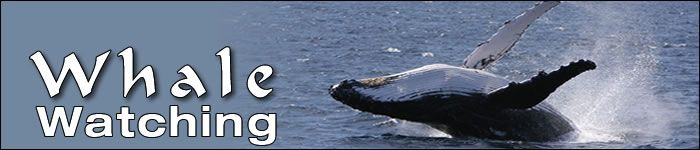 Dolphin Watching and Whale Watching - Nelson Bay Port Stephens - Tamboi Queen Cruises
