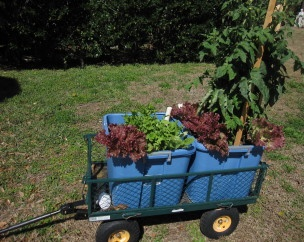 DIY Mobile Container Veggie Garden. Great Idea For A Yard With Shady Areas,