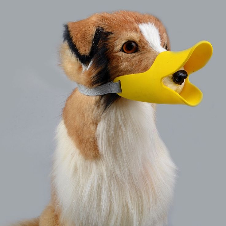 If it looks like a duck and sounds like a duck, it could be the anti biting & barking duck bill for dogs!