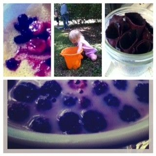 10 delicious ways to use mulberries   I can hardly wait for next summer! YUM