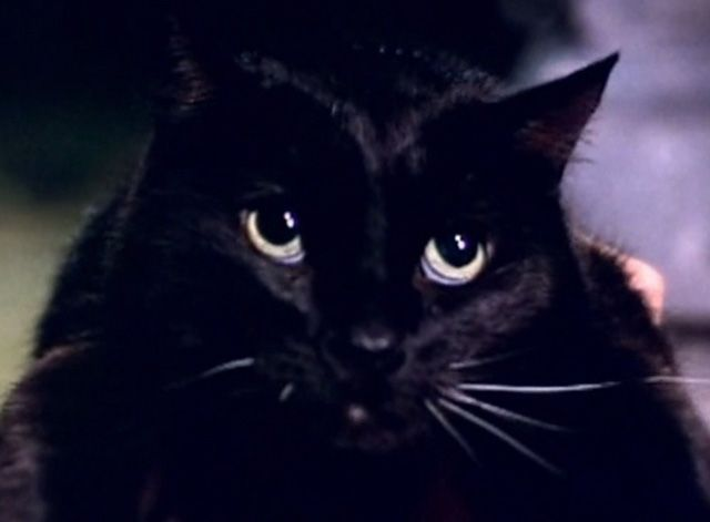 Cats infest an apartment and one of them even seduces Jeff Fahey in the horror film Serpent's Lair (1995).