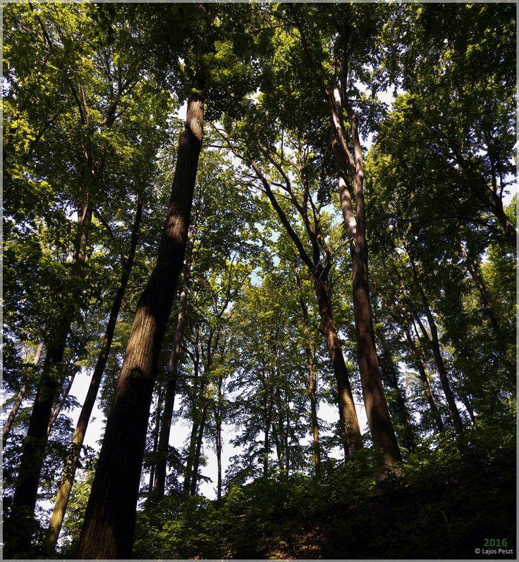 Nature Columns (A Természet Oszlopai)