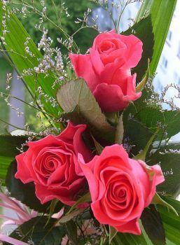 růže k narozeninám 2014 (88 pieces)