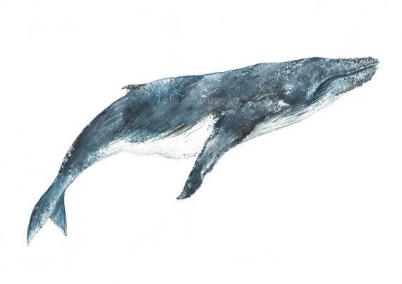 Humpback Whale Art Print on Etsy, $19.35