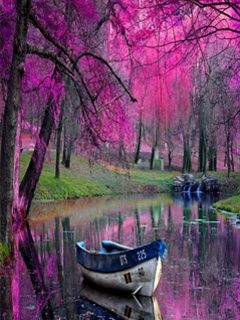 Peaceful scene of boat. Beautiful colors of the trees reflecting in the