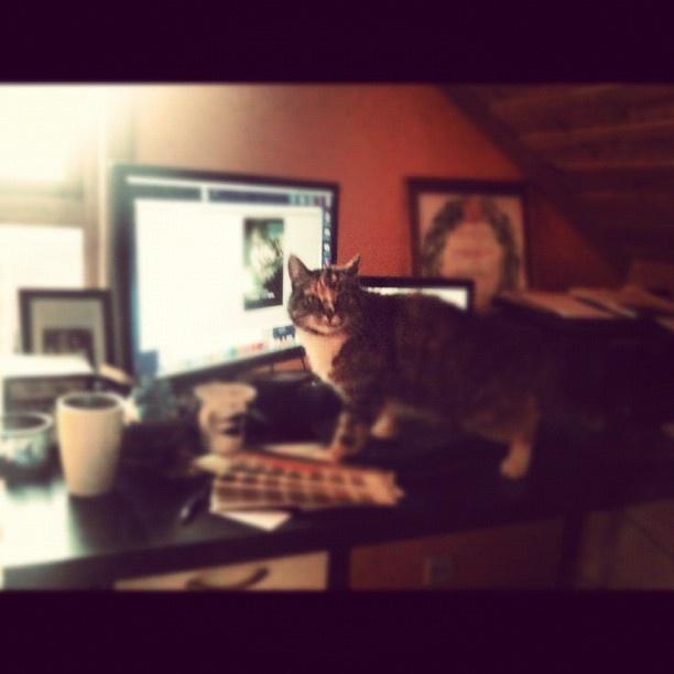 Pus er selskap - @suzyhaugan- #webstagram