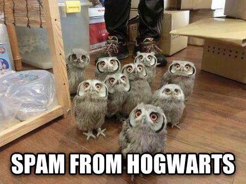Oh my gawd! I wish I got a spam from hogwarts!