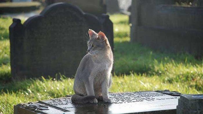 Foto: Web | Gato visita tumba