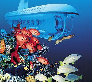 Atlantis Submarine Tour in St. Thomas - so fun!