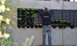green wall idea