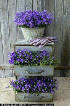 old drawers to potted planting