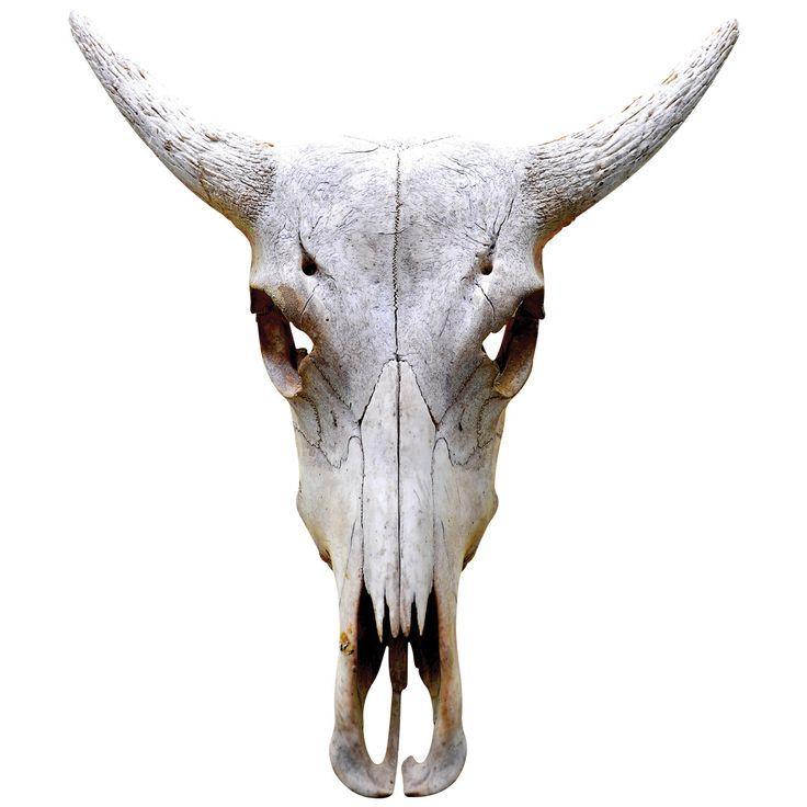 The 94 best Skeletons images on Pinterest | Animal anatomy, Bones ...