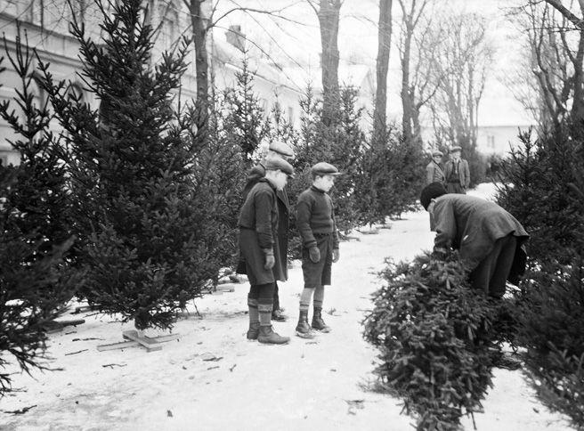 Christmas tree sales in Uppsala, Sweden, 1934