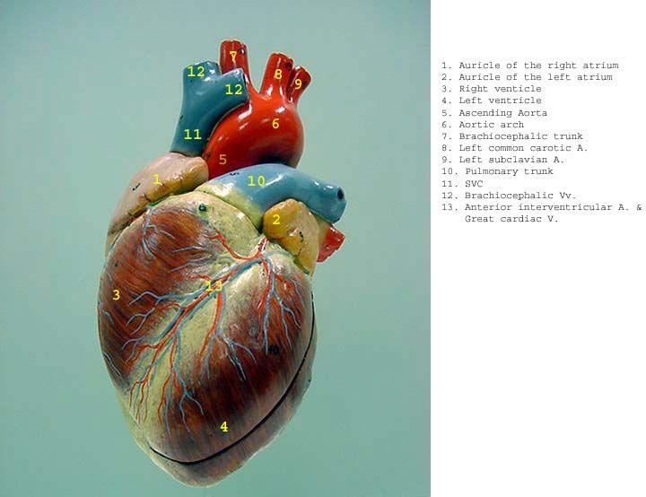 Heart_gray_label.jpg (720×554)