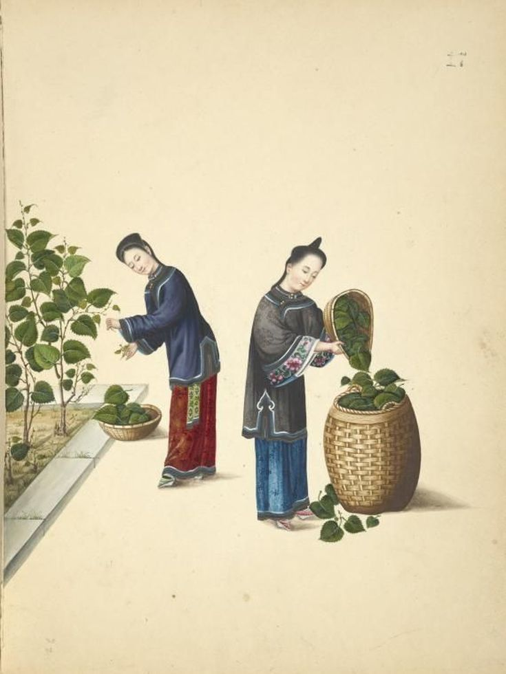 A Picture Essay on Silk Manufacture in Ancient China: The Mulberry Leaves
